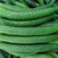 Vegetables cucumber ID: B5-08