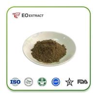 Fennel Powder Specification: Powder
