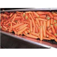 Quality Other Fresh and Frozen Vegetables Product Title:Carrot 04 for sale