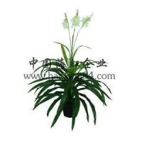 China Artificial 50-150cm Inch Plastic Gladiolus Silk Flower Plant Pot wholesale