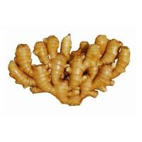 China The best Chinese fresh ginger and dry ginger price for sale on sale