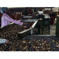 Quality Cashew Separator for sale