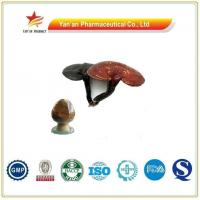 Quality Herb Reishi Mushroom Extract/Ganoderma Extract for sale