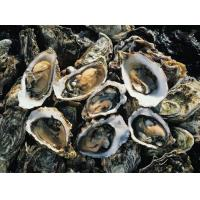 Oyster powder could fight cancer