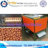 Quality macadamia tapping machine for sale