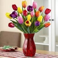 Quality Multi-Colored Tulips NO.21 delivery flower to taiwan for sale