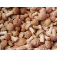 Quality IQF Frozen Mushrooms IQF nameko mushroom for sale