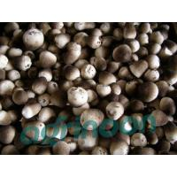 Quality Fresh Straw Mushroom for sale