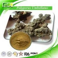 Quality Supply Best Price Polyporus Umbellatus Extract,Polyporus Umbellatus for sale