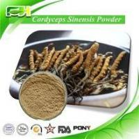 Quality Best Price Manufacture Natural Cordyceps Sinensis Extract for sale