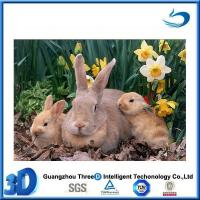 Quality Animal Cute and Sweet 3d picture elephant family for sale
