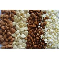 Quality Almond/Apricot Kernels for sale