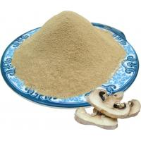 Quality Champignon (Agaricus Bisporus) powder for sale