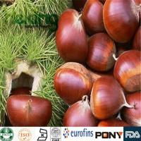 Quality Glycosides  Horse Chestnut Extract for sale