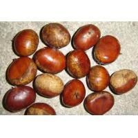 Quality chestnut for sale
