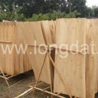 Quality Sawn timber EUCALYPTUS CORE VENEER for sale