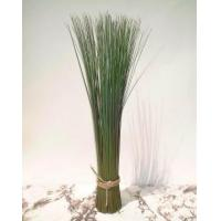 Quality Grasses & Cacti Reed Grass for sale