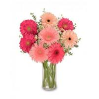 Quality Get Well Flowers DANCING DAISIESBouquet for sale