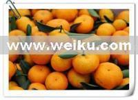 Quality Agriculture Sweet fresh oranges for sale
