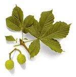Quality Horse Chestnut Extracts for sale