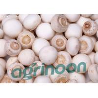Quality Fresh Champignon mushroom for sale