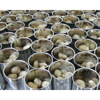Quality Canned Mushroom for sale