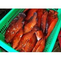 Quality Reef Fish (Mainly Grouper) for sale