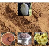 Quality Mushroom Powder for sale
