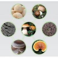 Quality The Era of mushroom for sale