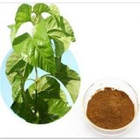 Quality Standard Plant Extract Contact Now Folium Mori Extract Powder for sale