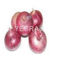 Quality onion for sale