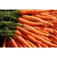 Quality carrot for sale