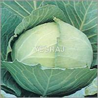 Quality Green Cabbage for sale