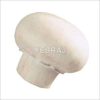 Buy Fresh Mushrooms at wholesale prices