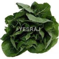 Quality Spinach for sale