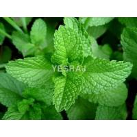 Quality Mint Leaves for sale