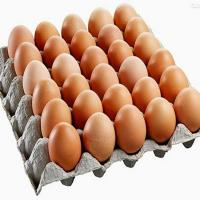 LC-TS Special Packaging Solutions for egg product with support tray