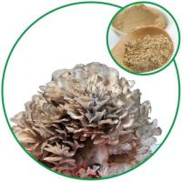 Maitake Mushroom Powder,with Effective Ingredient Grifolan from China Plant Supplier for Wholesale